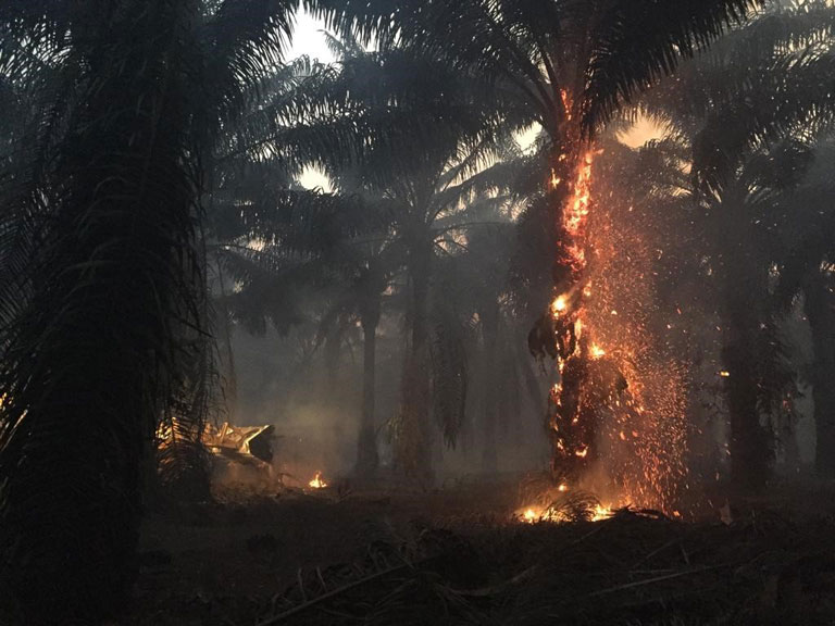 Fire burns palm trees in our plantation in-page image for September 6-10, 2019 hotspot monitoring update